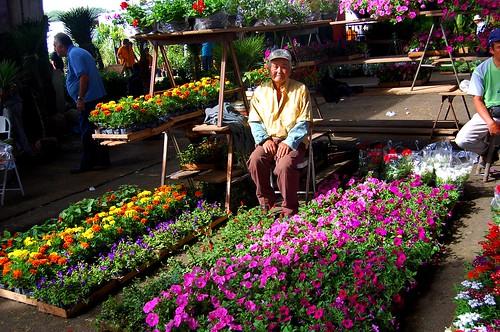 Nosso Box  de flores no Ceasa