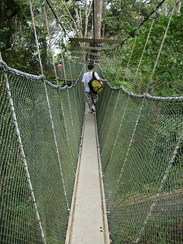 canopy walk, penang hill