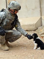[フリー画像] [戦争写真] [兵士/ソルジャー] [人物写真] [イヌ科] [犬/イヌ] [子犬]     [フリー素材]
