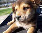 Kinship Circle - 2008-04-12 - Still Healing, One Animal At A Time 05