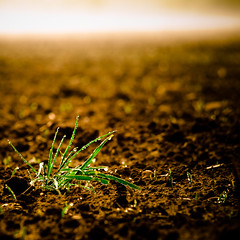 (growth) (gjik) Tags: brown field bokeh earth feld growth gras braun acker erde 150mm wachstum