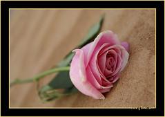 مـــبــــروك يا شيخ التواضع .. الشيخ سعيد بن مكتوم بن جمعه ال مكتوم (● Maitha ● Bint ●K●) Tags: