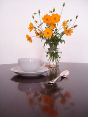 flores de cosmos (Daniboy) Tags: flower tea flor teacup cosmos xcara ch teaspoon