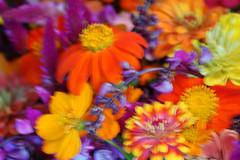 The Farm (mark willocks) Tags: arizona blur phoenix thefarm upcoming:event=981998