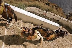~DonKeYs~ (Despina Alexandrou) Tags: sea summer hot canon island eos donkeys donkey santorini greece crete heat 2009 1000d