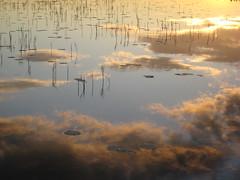 (surr urr) Tags: summer sky sunlight lake clouds mökki kaislat lumpeet