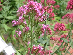 ortobotanico 316 (blum1) Tags: alberi fiori piante ortobotanico