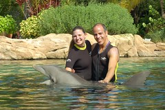 Dolphin swim at Discovery Cove