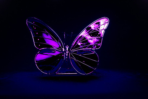 Blacklight Butterfly