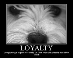 Wee Westie - Loyal Dog (Randy Son Of Robert) Tags: dog pet white black cute animal nose eyes fdsflickrtoys westie adorable canine terrier stare staring yoshi loyal weewestie 1stplacef2fchallenge