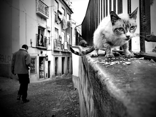 Street guardian