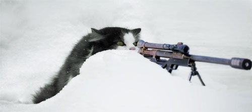 Cat Sniper Juxtaposition