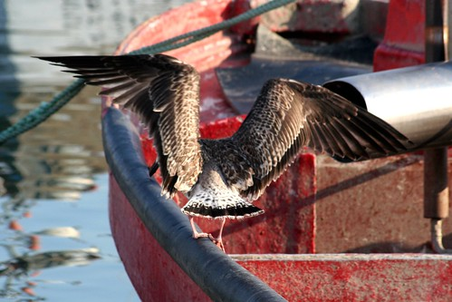 Big wings on a red boat....