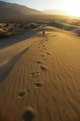 Paradox Dune (resonantred) Tags: california delete2 desert save3 delete3 save7 save8 delete delete4 save save2 save9 save4 deathvalley save5 save10 save6 savedbythedeltemeuncensoredgroup sanddunes stovepipewells diabolifreak