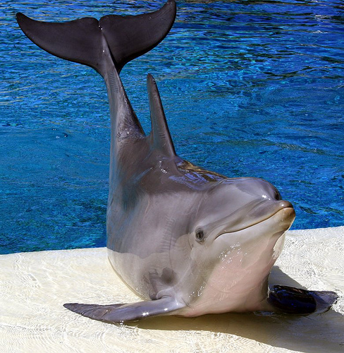 dolphin by manaphy0930.
