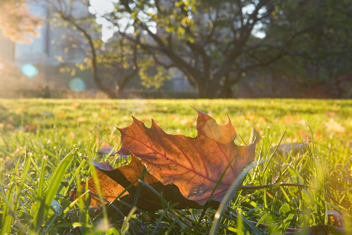 Leaf on Grass (Central Park, New York)