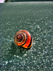 Spirale (wemidji) Tags: spiral snail escargot hdr scoremehdr305 gmr34