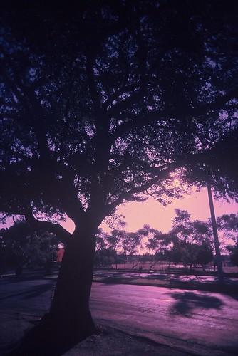 In the purple highway!