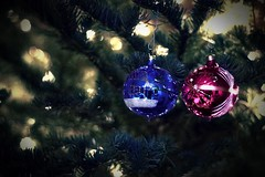 Merry Xmas Everyone!!!! (Fer Gregory) Tags: pictures santa christmas new city pink blue tree green art glass colors pine canon season mexico eos 50mm navidad mas code cool df icons flickr december photographer seasons bokeh d background year joy happiness dry myspace x clip reflected ornaments sphere presents wishes present hanging 40 mm merry wish claus 50 2008 boke federal mexicano comments relfection diciembre fotografo facebook e0s hi5 esfera distrito esferas freg navideñas navideña 40d ƒreg merrychristmascomments myspacemerrychristmascomments