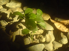 bukas (* jdt... (shabba!)) Tags: plant walking lights shadows stones philippines ground pebbles beam growth sunbeam sprout lightplay jdt opmseries songbitsfromleassongsfromhomeinspired