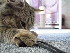 IMG_0123 (fadingembers) Tags: animals stormy kitties bigpurplehouse