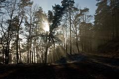 Forest near Annweiler
