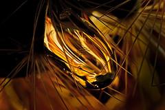 golden drop (Auch Einer) Tags: cactus macro canon catchycolors drops vivid drop sphere refraction liquid spikes smrgsbord retroadapter eos400d excellentphotographerawards gotasdrops macroflowerlovers