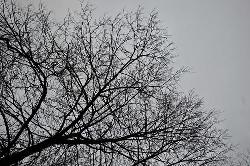 Дерево 3