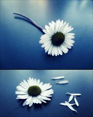 [come un fiore..]