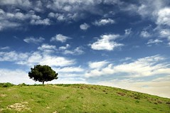 A tree wishing to fly (cuellar) Tags: blue wallpaper sky tree verde green primavera azul landscape arbol spring cuellar cielo lonely optimism solitario optimismo abigfave treesubject