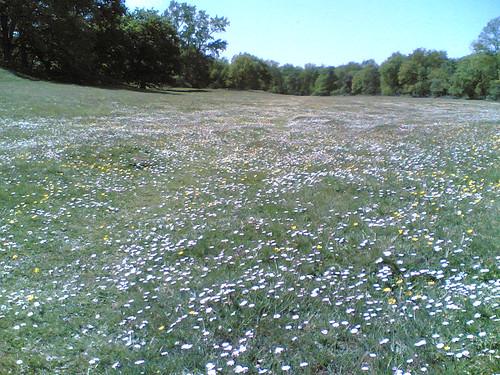Prairie de fleurs sauvages