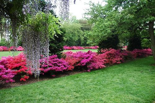 Flatbush Gardener: The Osborne Garden and Shade Garden at the ...