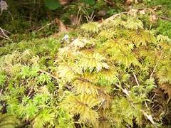 Palm moss