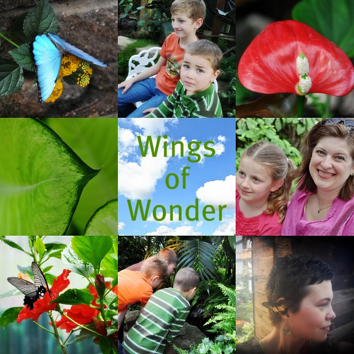 Wings of Wonder