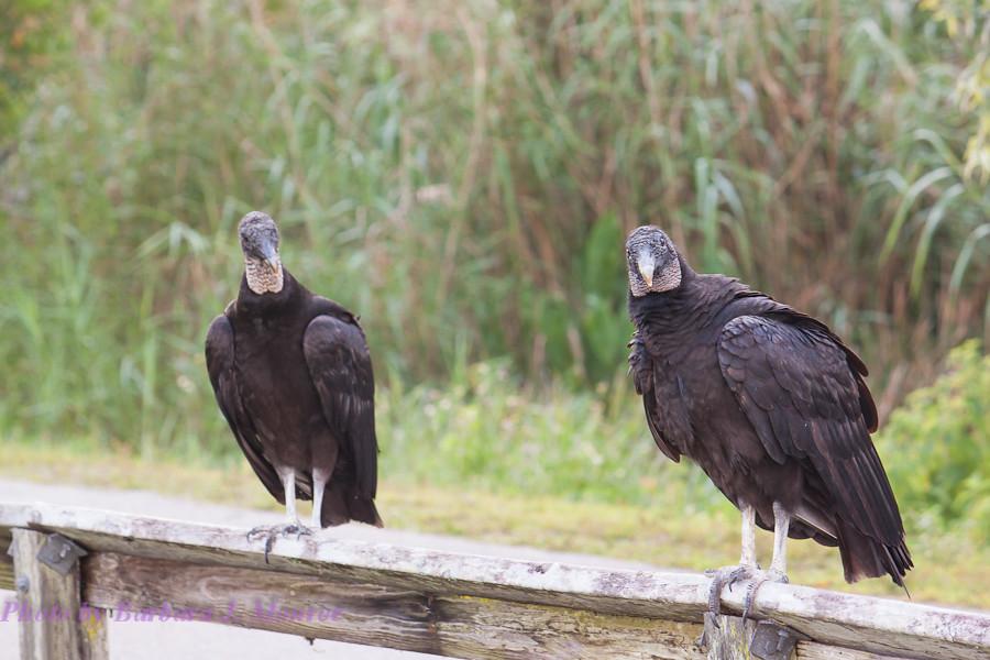 Everglades National Park (14 of 40)