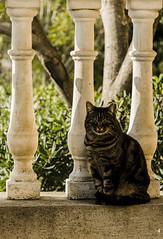 Cat posing (giacomobro) Tags: light shadow cat nikon ombra gatto bianco luce micio catty balaustra posa d5100