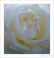 pure and simple (Roszita) Tags: macro rose closeup excellence naturesfinest blueribbonwinner mywinners abigfave superaplus aplusphoto ultimateshot superbmasterpiece flickrdiamond empyreanflowers floralexcellence scarletrose77 queenrose betterthangood secretwhite goldstaraward