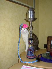 Fusillo the Egyptian