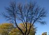 DSC_0595.NEF (Holly Eggleston) Tags: fall leaves work around