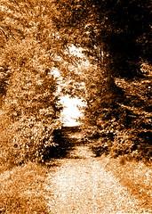 (nickmaster23) Tags: trees nature monochrome boring landsape