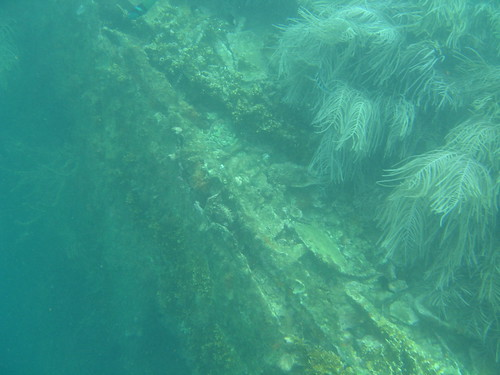 Snorkeling Shipwreck