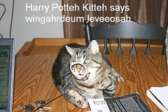 Wizard Kitteh (AshleyNH84) Tags: cat wizard magic harry potter harrypotter kitteh funnycat levitate lolcat icanhascheezburger wizardkitteh