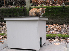Roofnap (Jimmy Legs) Tags: rescue house wall brooklyn cat feline outdoor shelter tnr bushwick plywood feral strays insulated feralvilla