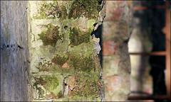 Surface Tensions (Steve_C) Tags: brick window wall canon rust december algae 2008 crusty 2007 panshanger sigma105mm canoneos40d sigma105mmexdgf28macro