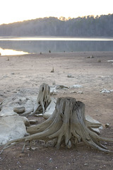 stumps (barnstormeffect) Tags: lake tree bed birmingham alabama dry drought stump purdy
