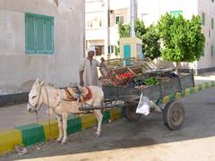 Donkey Cart (upyernoz) Tags: egypt donkey mut مصر dakhla dakhlaoasis الداخلة موط