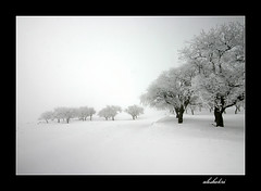 ( Ali Shokri / www.alishokri.com) Tags: new travel winter light blackandwhite bw snow art nature canon landscape photography photo blackwhite iran photos azerbaijan just your pixels photoart natures    blackwhitephotos platinumphoto anawesomeshot ysplix amazingamateur goldstaraward wwwalishokricom alishokri