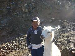 Huaynacotas lama