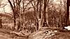 Alberi d'inverno -  Trees in winter (Ola55) Tags: wood trees alberi inverno bosco olomouc blueribbonwinner repubblicaceca supershot fdream worldtrekker yourcountry ola55
