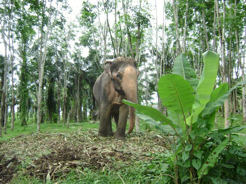 Nosey's parker elephant camp